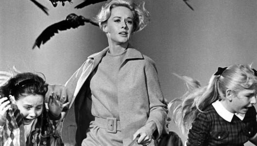 Hitchcock lot seg inspirere av Du Mauriers novelle «The Birds» (1952) da han laget «Fuglene» i 1963. Et kostbart prosjekt med blant annet spesialtrente fugler.