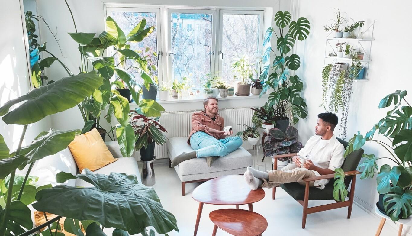 Andreas Qvale Hovland (t.v.) og Daniel Rodrigo Qvale driver Instagram-profilen Plant Papis. Der deler de bilder av egne planter, og videoer med tips om stell, stiklinger og plantetrivsel.