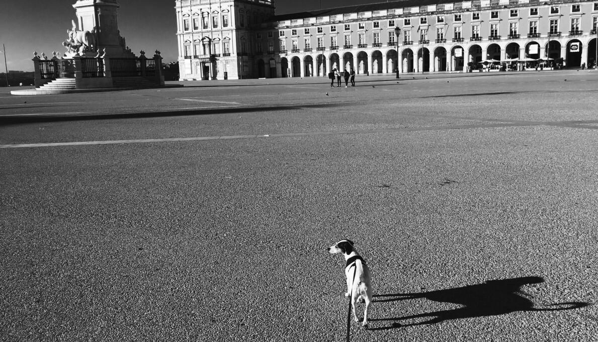 Børge Skråmestø og hunden Stella har ofte trålet gatene i Lisboa. I fjor påske måtte han bruke fantasien for å oppleve den portugisiske hovedstaden. Ut av den imaginære turen kom reiseskildringen «Tilbake til Lisboa og trappene i Sankt Crispin».